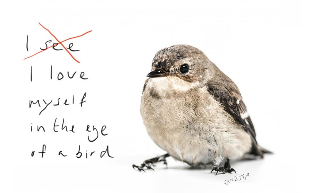 In the eye of a bird