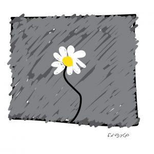 A new daisy